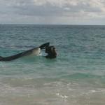 Tiger Shark and Albatross
